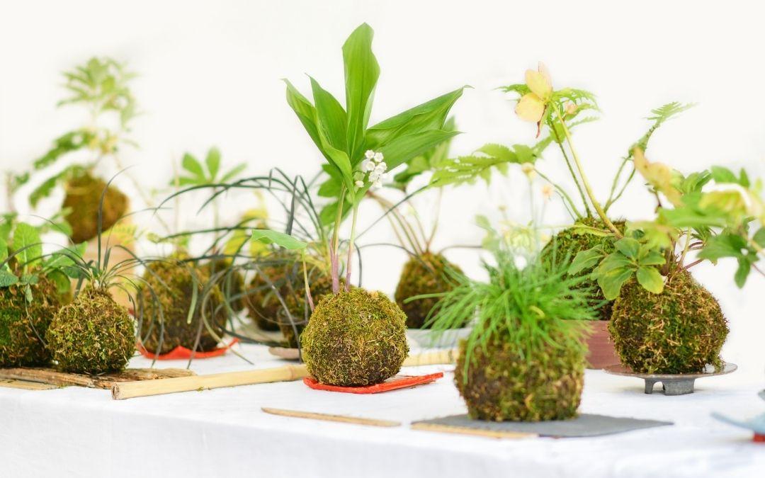 Kokedama Moss Ball Plant Hangers